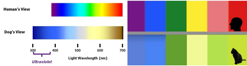 The visible spectrum for dogs (left), and a comparison of what colors a human sees vs. a cat (right).