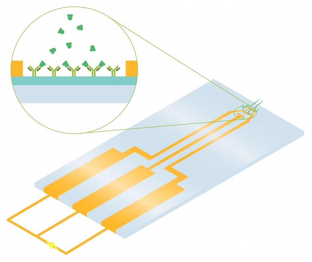 Field Effect Transistor (FET): Chemical and Biosensor Chips