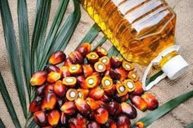 Utilizing Senix ToughSonic Sensors for Palm Oil Tank Measurement