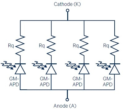 The parallel arrangement of GM-APDs with series quenching resistors (Rq) in a SiPM.