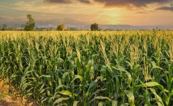 What are the Most Recent Developments in Agricultural Sensors?