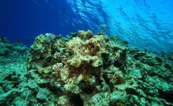 The Future of Ocean Health Diagnostics with Argo's Biogeochemical Sensors