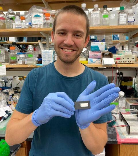 Genetic Modification: Used as Biosensor for Antibody-Based Medical Diagnostics.