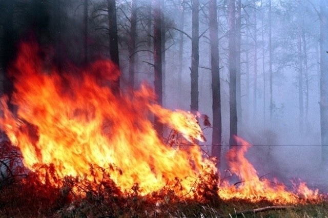 TPU's Alexander Khamukhin Patent New Method to Detect Forest Fires by Sound
