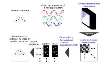 Novel Color-Multiplexed Holography System Senses Fluorescence, White Light