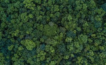 New Indicator for Monitoring Threats to the World's Rainforests