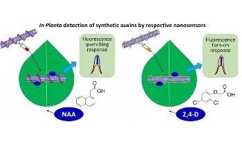 Novel Sensor can Revolutionize Screening for Herbicide Resistance in Plants