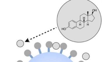 New Method Detects Hormonally Active Compounds Using Immobilized Sulfotransferases and Microparticles